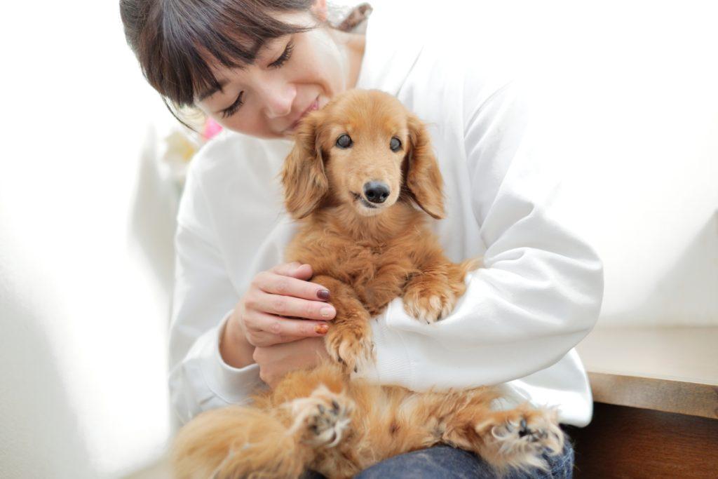 ペットの臭い対策について